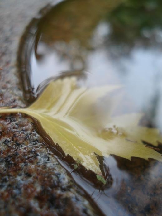 Fall 2011 273