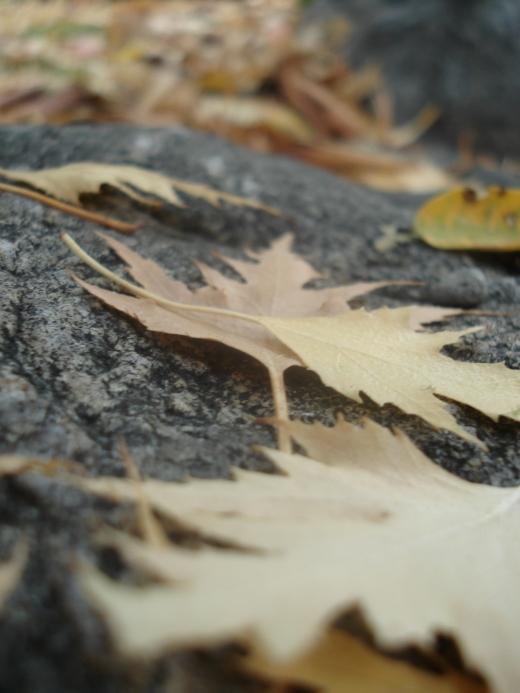 Fall 2011 232