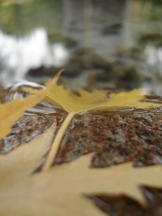 Fall 2011 246