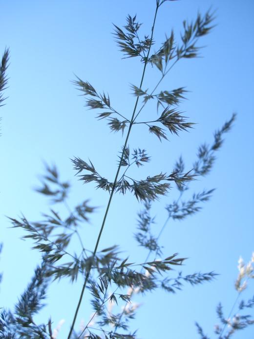 GRASS 070