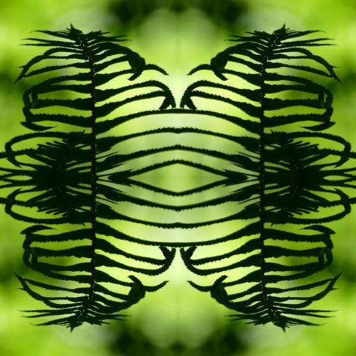 Fern Collage michael sean symonds