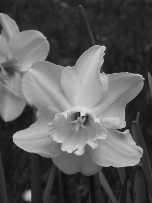Spring 072bw2